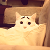CAT FRIDAY: Meet the Internet's next big viral kitty: Sam the Eyebrow Cat