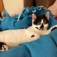 CAT FRIDAY: Panda, the Lucky Kitten