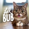 CAT FRIDAY Special Edition: Lil BUB and the Internet Cat Video Film Fest coming to Spokane