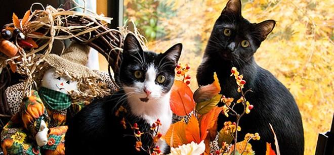 tgivingcats.jpg