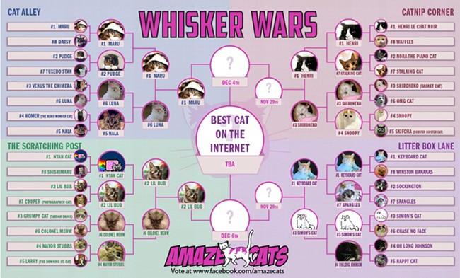 whiskerwars.jpg