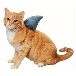 sharkfin.jpg