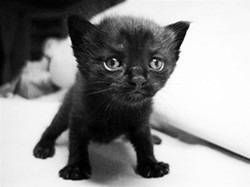 cute_black_kitten.jpg