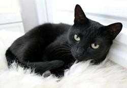 black_cats6.jpg
