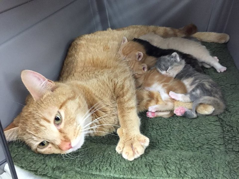It's always best when a mother can care for her own kittens, but many babies also come in as orphans. - SPOKANE HUMANE SOCIETY
