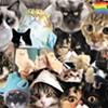 Cats Dot Com