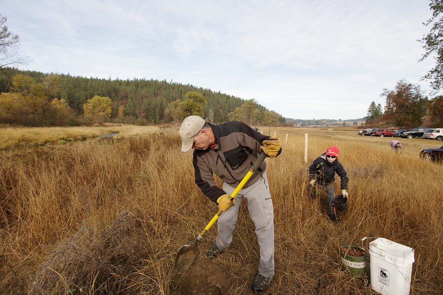 Chad Skidmore, left, digs a hole as his 9 year old son Cole brings quaking aspens to plant. - YOUNG KWAK