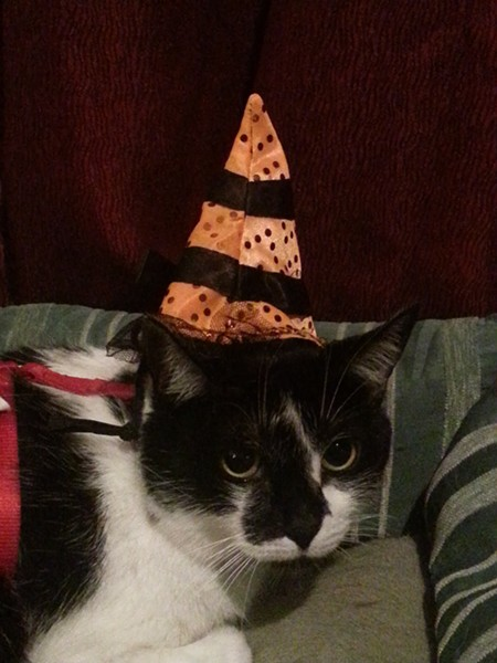 Daisy, another adorable witch kitty, and Nathan's brother, from Spokane Valley.