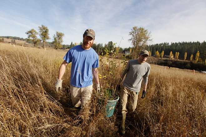 Devin Sontage, left, and Adam Gebauer carry cottonwood to plant. - YOUNG KWAK