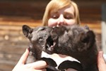Educational speaker Kalla Denison holds the 5-week-old wolf puppies, Teto and Ki Lani.