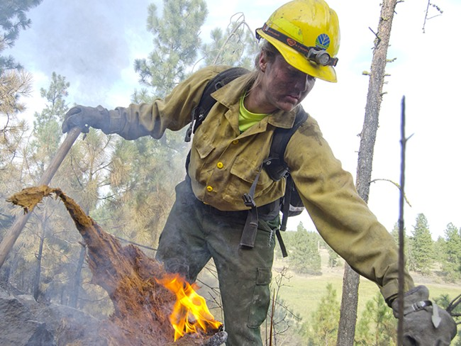 Emily Harpel, a first-year firefighter with the Department of Natural Resources, digs out a burning stump during mop-up on the Depot Springs Road fire in late August. - JACOB JONES
