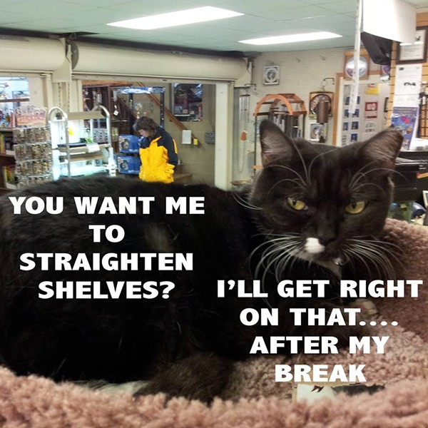 Gertrude became NW Seed's Sprague location mascot after life as a shelter cat.