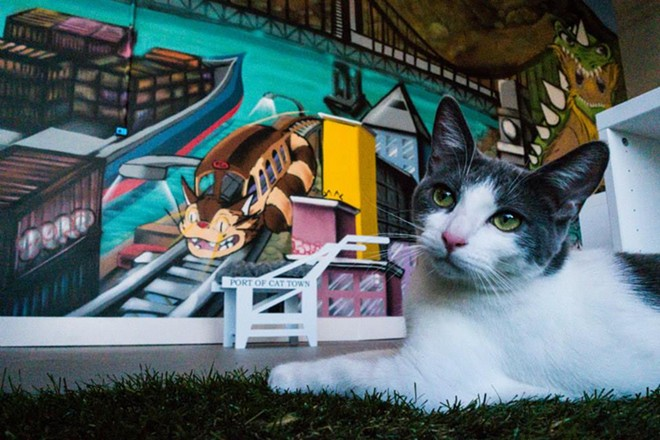 Glynda, a resident of Oakland's Cat Town Cafe, the first cat cafe to open in the U.S., last month. - CAT TOWN CAFE & ADOPTION CENTER FACEBOOK
