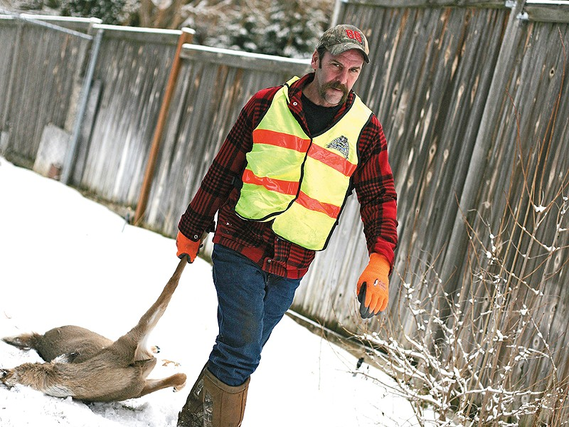 Inland Northwest Wildlife Council volunteer Rick Hedquist recovers a deer from a back yard in Spokane. - YOUNG KWAK