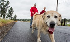 PHOTOS: Parade of Paws