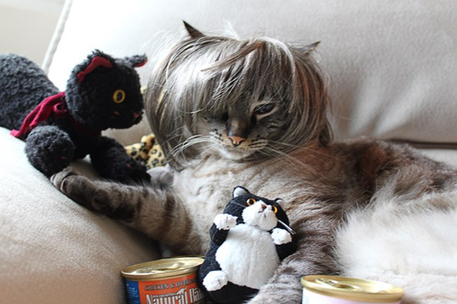"""Jitters, a cat dressed as a """"crazy cat lady,"""" from Torrance, Calif. Submitted by Leah Workman."""