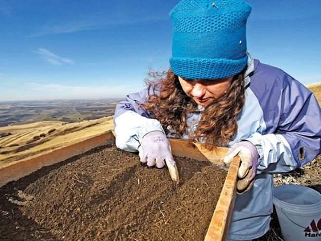 Jodi Johnson-Maynard hand sorts soil on Moscow's Paradise Ridge - YOUNG KWAK