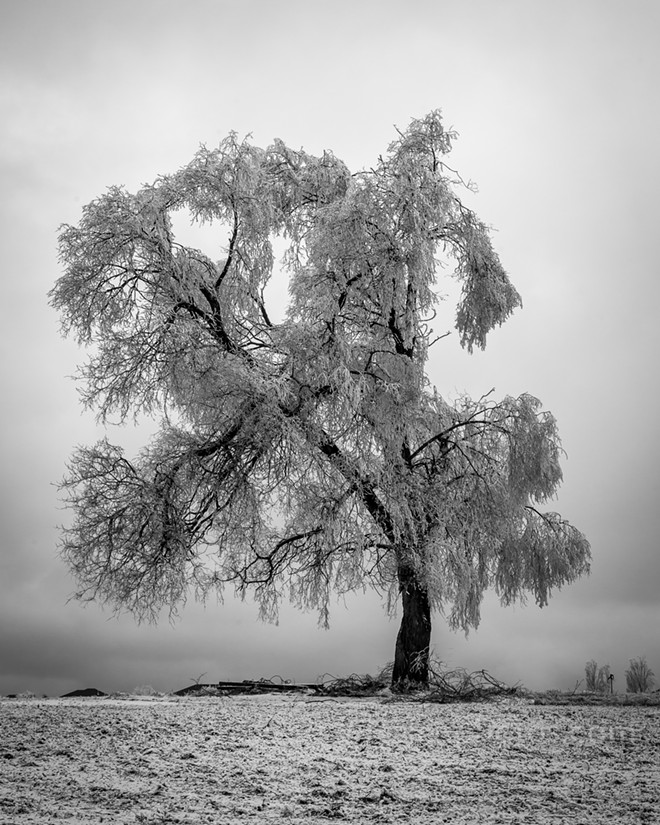 "John Holen's ""Ice Tree"" will be one of his photos on display at Avenues West Gallery. Artist reception starts at 5 pm Friday."