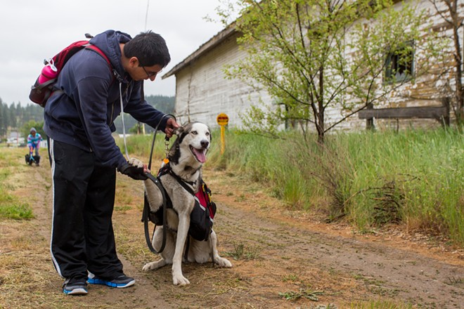 Juan Avila calms down Aika, a one-and-a-half-year-old Siberian Husky. - MATT WEIGAND