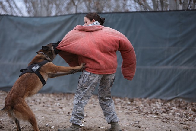 During a training exercise, 376th Expeditionary Security Forces Squadron/K9 Military Working Dog Yyoda subdues Kennel Master E5 Staff Sergeant Janna McDonald. - YOUNG KWAK