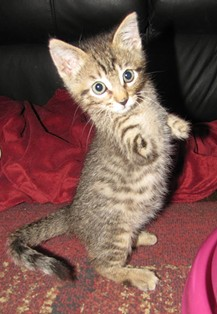 Mercury gets around just fine despite missing his front limbs. (Nov. 2013) - RAISING MERCURY FACEBOOK PAGE
