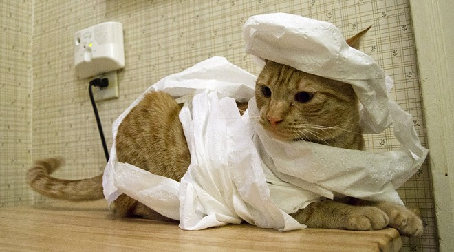 Mick the Mummy prefers a messier look to his toilet paper wrappings. Mick and his sister Clementine, who wanted nothing to do with silly costumes, steal pens and iPhones from their owners, Inlander Web Editor Lisa Waananen and Staff Writer Jacob Jones, on a regular basis.