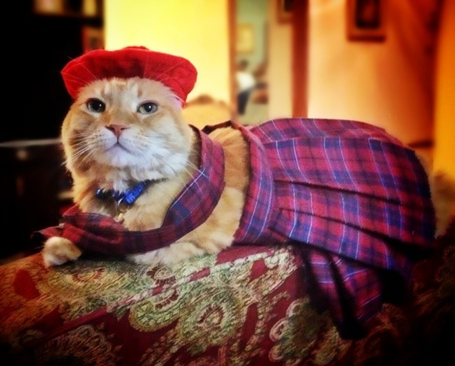 Morris dressed as a dapper Scottishman. He's from Orlando, Florida, and his photo was submitted by Clare D.