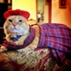 CAT FRIDAY: Results of the 2014 Halloween Cats Photo Contest