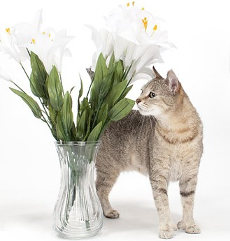 Thankfully these lilies look fake, because this kitty is getting a little too close to the toxic plant.