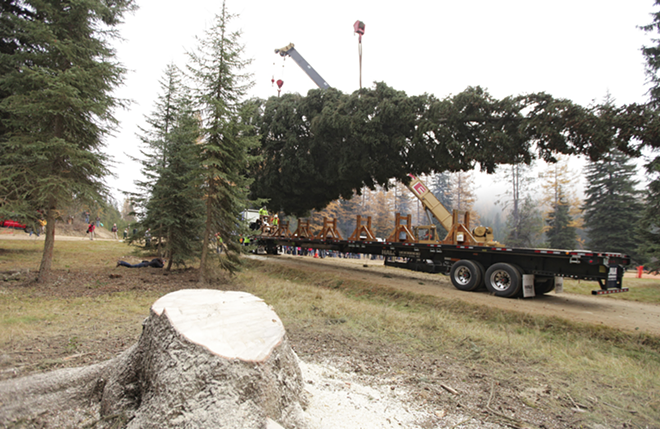 Crews haul away an 88-foot Engelmann Spruce from the Colville National Forest, near Usk, Wash., to serve as this year's U.S. Capitol Christmas Tree in November 2013. - YOUNG KWAK