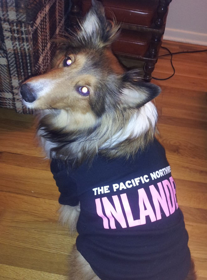Obviously Zooey the sheltie isn't a cat, but her feline siblings Grey Boy and Lola were too scared to wear any costumes this year, so she stepped up to the plate instead. Zooey and her kitty siblings are the light of Inlander graphic designer Jessie Spaccia's life.
