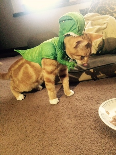 Oliver, of Spokane, is a cat-osaurus rex. Submitted by Chelsey J.