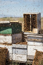 Olson's Honey bee hives and frames are photographed during sorting.