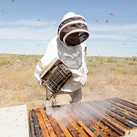 Photos: Local beekeepers and their hives Olson's Honey employee Furmin Lua smokes a bee hive before inspecting the frames within. Young Kwak