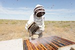 Olson's Honey employee Furmin Lua smokes a bee hive before inspecting the frames within.