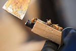 Olson's Honey Field Supervisor Matthew Shakespear holds an enclosed queen bee.