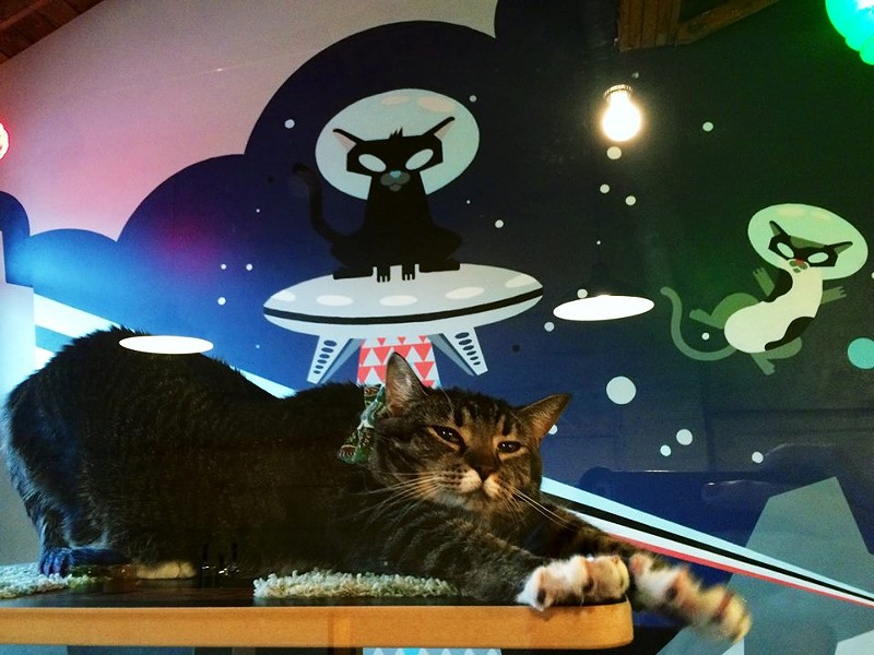 One of the cafe's first ever residents, Begonia, stretches in front of an amazing space cat mural. - PURRINGTONS FACEBOOK