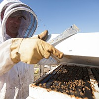 Photos: Local beekeepers and their hives Owner Mike Durst opens a hive at Mark T. Durst and Sons. Young Kwak