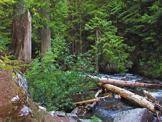 Prone to flooding, Settler\'s Grove acts as a natural fire extinguisher.