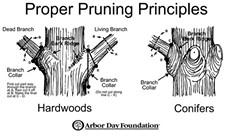88d46441_pruning_101.jpg