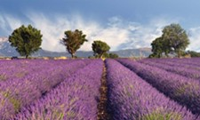 Purple Palate Pleaser