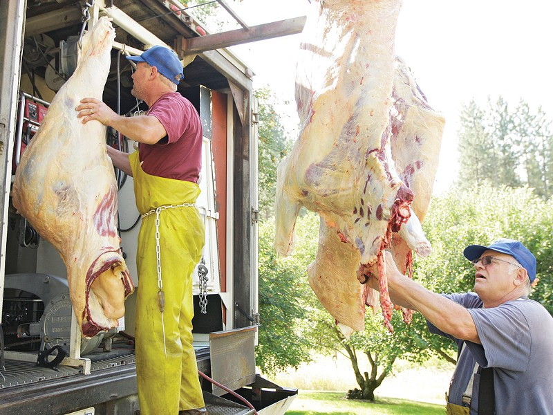 Quadra-K-Meats co-owners Jeff Wilke, left, and his father, Ken, slaughter a cow in their mobile butcher shop. - YOUNG KWAK