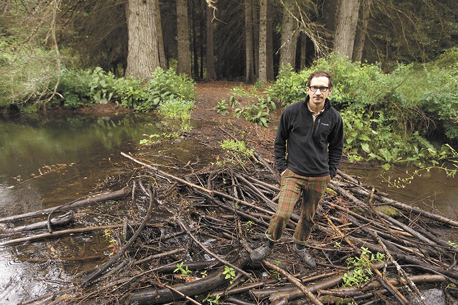 Restoration Ecologist Joe Cannon, standing on a beaver dam in Liberty Lake Regional Park, searches for solutions when beavers become pests. - YOUNG KWAK