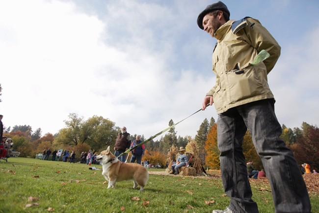 Sean Benson, who is dog sitting Lacey, a corgi, walks through the park. - YOUNG KWAK