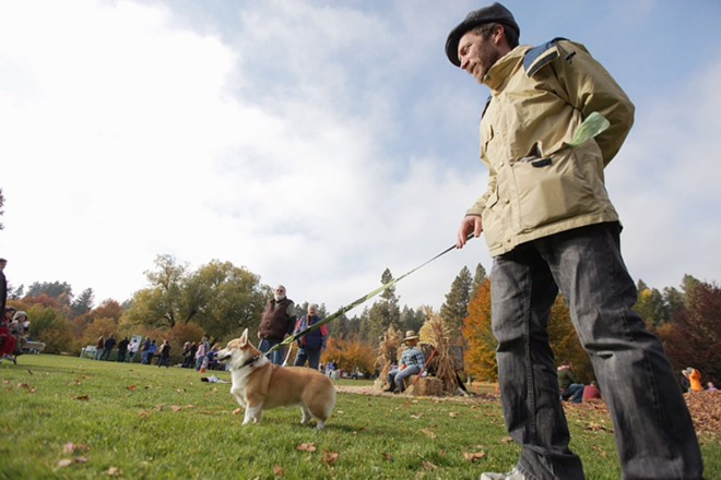 Sean Benson, who is dog sitting Lacey, a corgi, walks through the park. - YOUNG KWAK