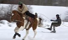 Skijoring, Anyone?