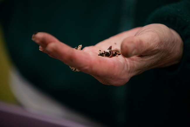 Spokane Master Composters volunteer Carol Albietz holds a worm from a compost bin. - YOUNG KWAK