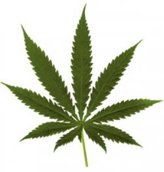blog_marijuana_leaf.jpeg.jpg