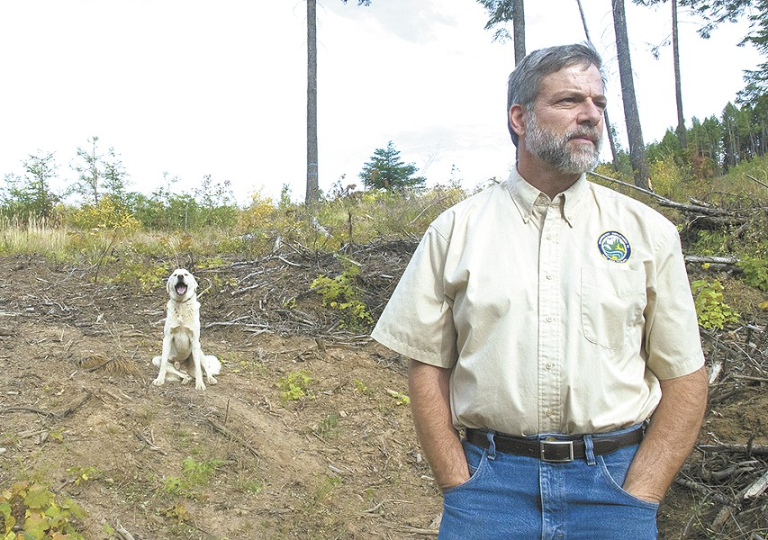 Steve Pozzanghera, regional director for the state's Department of Fish & Wildlife, watches a passing flock of sheep in Southern Stevens County that has suffered wolf attacks as one of several guard dogs sits nearby. - JACOB JONES