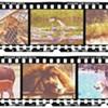 Summer Guide 2014: Animals